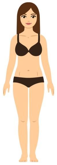estrutura corporal, estruturas corporais